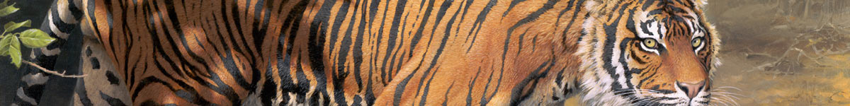 Detail from Ranthambore Tiger