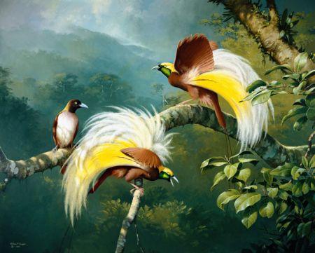 Drawn From Paradise David Attenborough